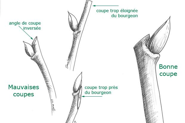 comment tailler une branche
