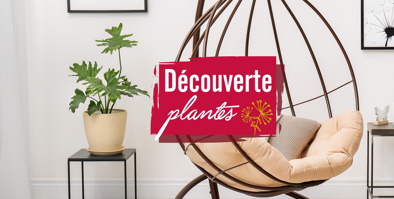 Découverte plante Les philodendrons
