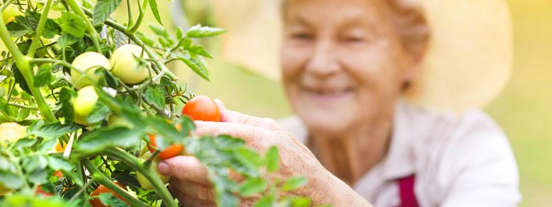 legume de nos grands-mères